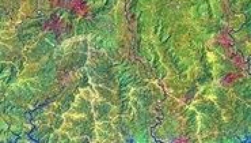 Regnskog forsvinner hurtigere