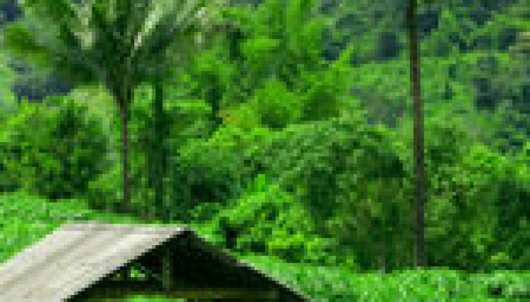 Gunstige plantasjar i regnskogen
