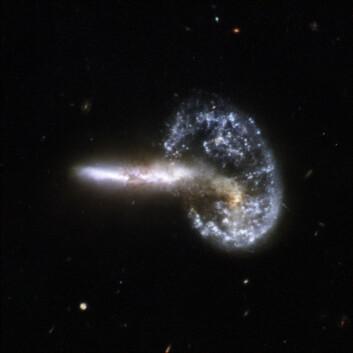 """""""Bildet fra Hubbleteleskopet viser de voldsomme følgene av to galakser som har kollidert.Sammenstøtet har skapt ekstreme sjokkbølger i galaksen som nå kan sees som en sirkel. Først ble materie i galaksen trukket inn mot midten, før massen ble spredt utover igjen i en jevn sirkel. Den haleformete galaksens posisjon i forhold til den andre, tyder på at kollisjonen fortsatt finner sted, i følge forskerne. Galaksene befinner seg i stjernebildet Store bjørn, omlag 500 millioner lysår unna jorden. (FOTO: NASA/ESA)"""""""