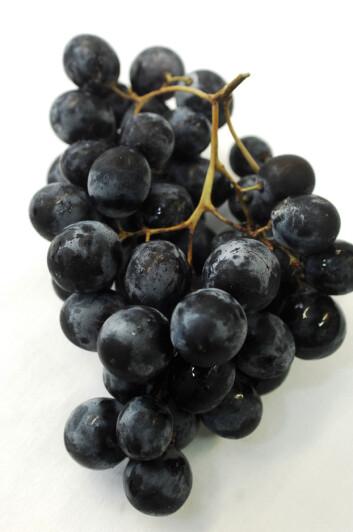 """""""Rottene fikk båe grønne, røde og blå/sorte druer. Effekten var upåklagelig. (Foto: Colourbox.com)"""""""