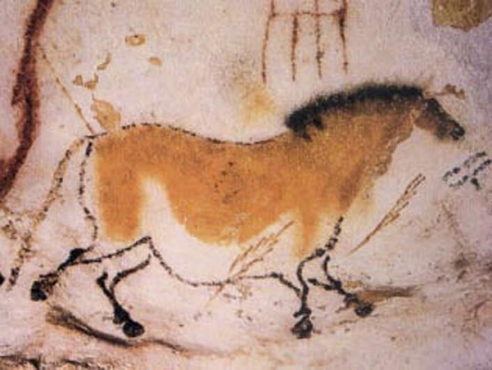 """""""Rundt 16 000 år gammelt maleri av hest fra hulene iLascaux i Sør-Frankrike. (Foto: Wikimedia Commons)"""""""