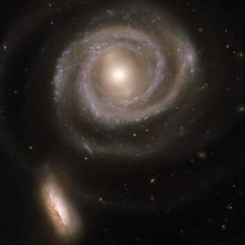 """""""Størrelsen har mye å si for utfallet når to galakser nærmer seg hverandre. Den store spiralgalaksen er nesten ikke påvirket av møtet, mens den lille begynner å bli utflytende i formen. Den lille galaksen inneholder mange svært store og lyssterke stjerner i de midtre områdene. Galaksene er omlag 200 millioner lysår unna. (Foto: NASA/ESA)"""""""