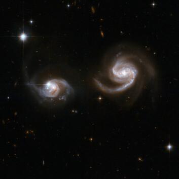 """""""Den minste spiralgalaksen, til venstre i bildet, vil trolig bli slukt av den andre. En begynnende påvirkning kan tydelig sees som utflytende tråder fra begge galaksene. Den store galaksen kalles LEDA 62867, og var åsted for en enorm supernovaeksplosjon i 2004. Galaksene er omlag 350 millioner lysår unna. (Foto: NASA/ESA)"""""""