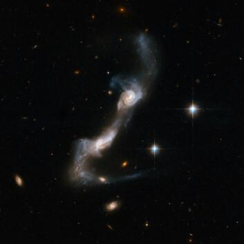 """""""De to spiralgalaksene er under sterk påvirkning fra hverandre. En tydelig bro, som kan bestå av gasser og partikler, er etablert. Hver galakse har også kastet en lang hale ut i verdensrommet. Galaksene er omlag 400 millioner lysår unna. (Foto: NASA/ESA)"""""""