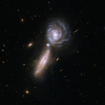 """""""Begge disse galaksene inneholder svært mye gass, og er i et tidlig stadium av et sammenstøt. Enorme mengder infrarødt lys stråler ut fra massive stjerner i formasjonene. Galaksene er omlag 450 millioner lysår unna. (Foto: NASA/ESA)"""""""