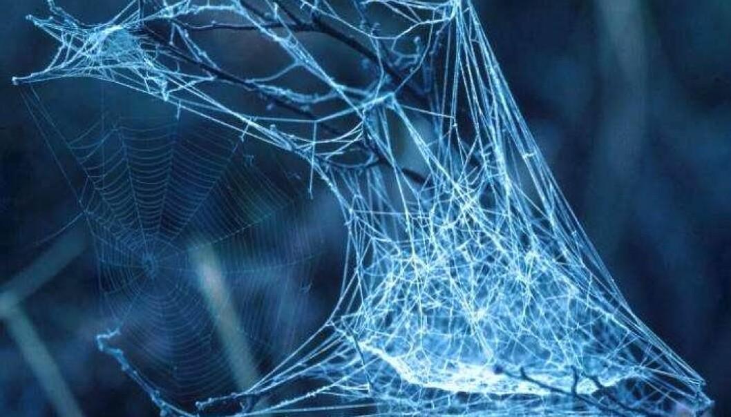 Verdens eldste edderkoppsilke er funnet