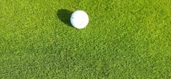 Golfgraset hundekvein. (Foto: Trygve S. Aamlid)