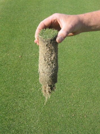 Jordsylinder av golfgras. (Foto: Trygve S. Aamlid)