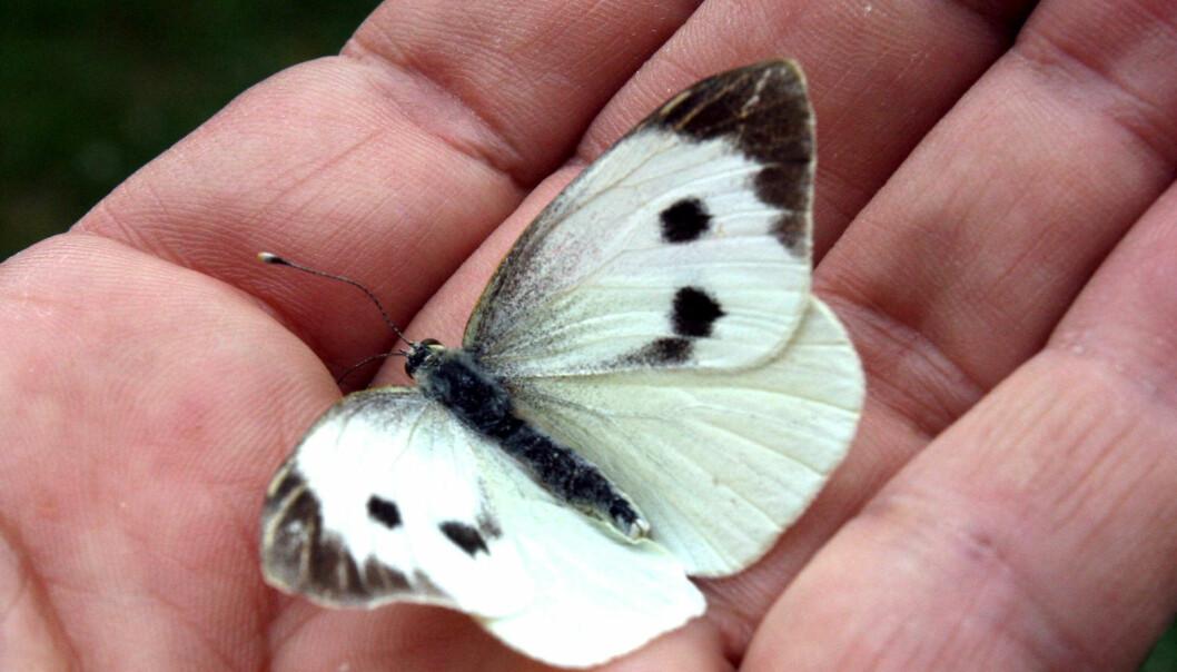 (Foto: Colourbox.com)