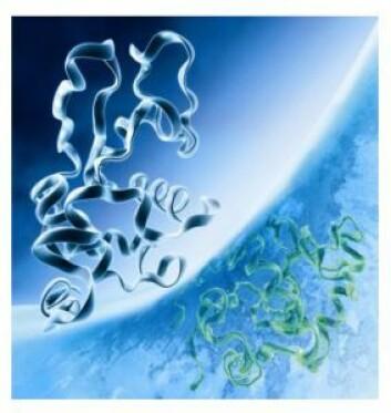 To strukturelt like protein med ulik funksjon. (Foto: Karn Bryhn og Øyvind Halskau)