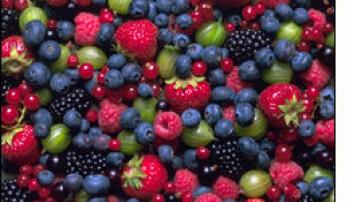 Skogsbær er blant nordiske kokkers favorittråvarer.