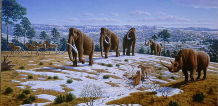 """""""Megafauna: Mammutene levde blant ullhårete neshorn, sabeltanntigere og en rekke andre dyr som i dag er forsvunnet. Men hvorfor forsvant de? (Illustrasjon: Mauricio Anton)"""""""