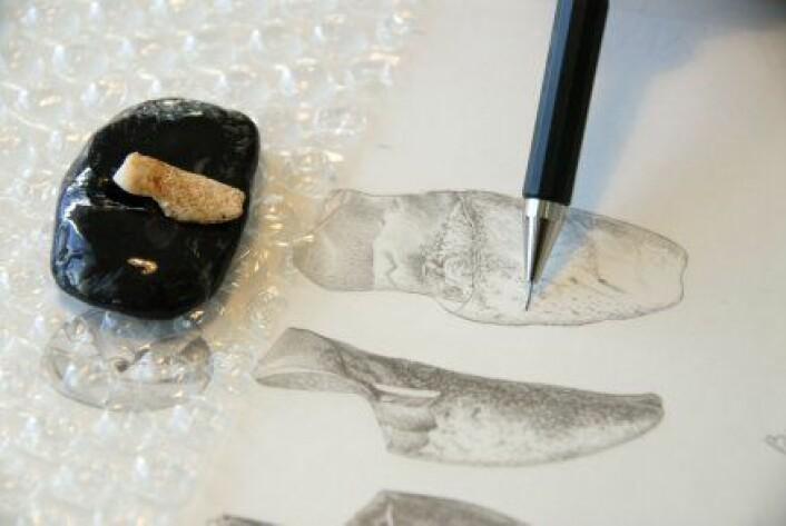"""""""Illustrasjoner av en tann. (Foto EIA/Jordi Mestre)"""""""