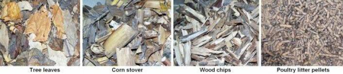 """""""Råmaterialer for å lage biokull: Løv, maisblad og -stilker, trebiter, og pellets av avføring fra fjærkre. (Foto:Mingxin Guo)"""""""