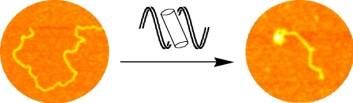 """Den supermolekylære sylinderen binder opp DNA-molekylet."""