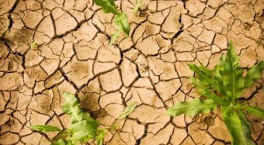 Vil lage planter som tåler tørke