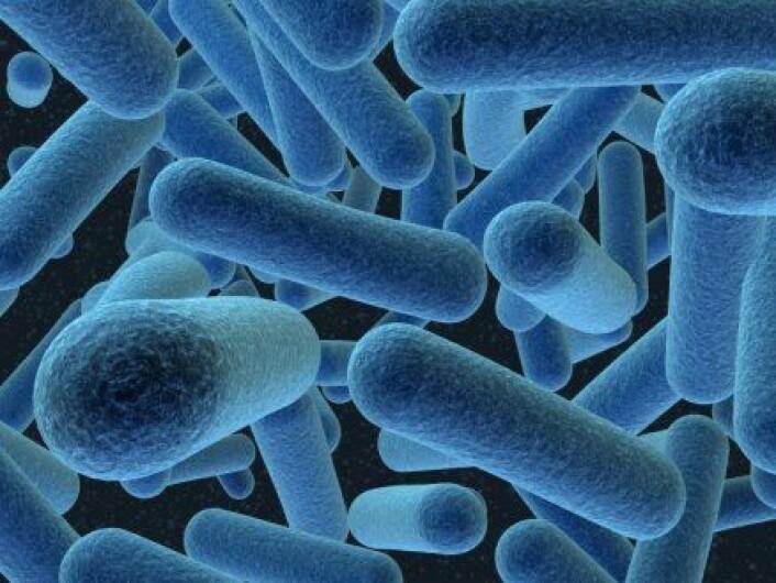 """""""Noen bakterier har en egen evne til å katalysere isdannelse."""""""