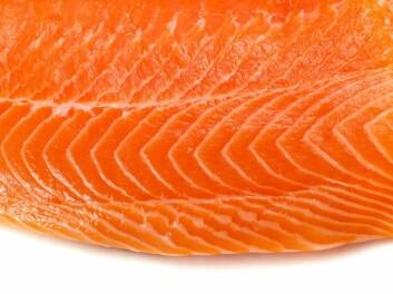"""""""- Det er allerede laget fiskemuskelkulturer som folk har spist, sier professor Omholt. (Illustrasjonsfoto: iStockphoto)"""""""