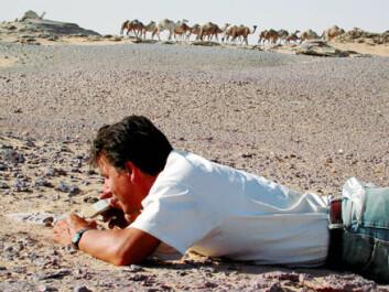 """""""Forsker Paul Sereno sjekker ut kjeven til Eocarcharia dinops i Sahara-ørkenen. Foto: Mike Hettwer/Project Exploration."""""""