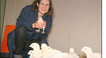Studerer sykdomsbakterier i kylling