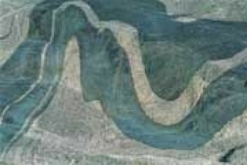 """""""Naturen er full av mønstre som striper, prikker og bølger, ifølge forskerne. (Foto: Samfoto)"""""""