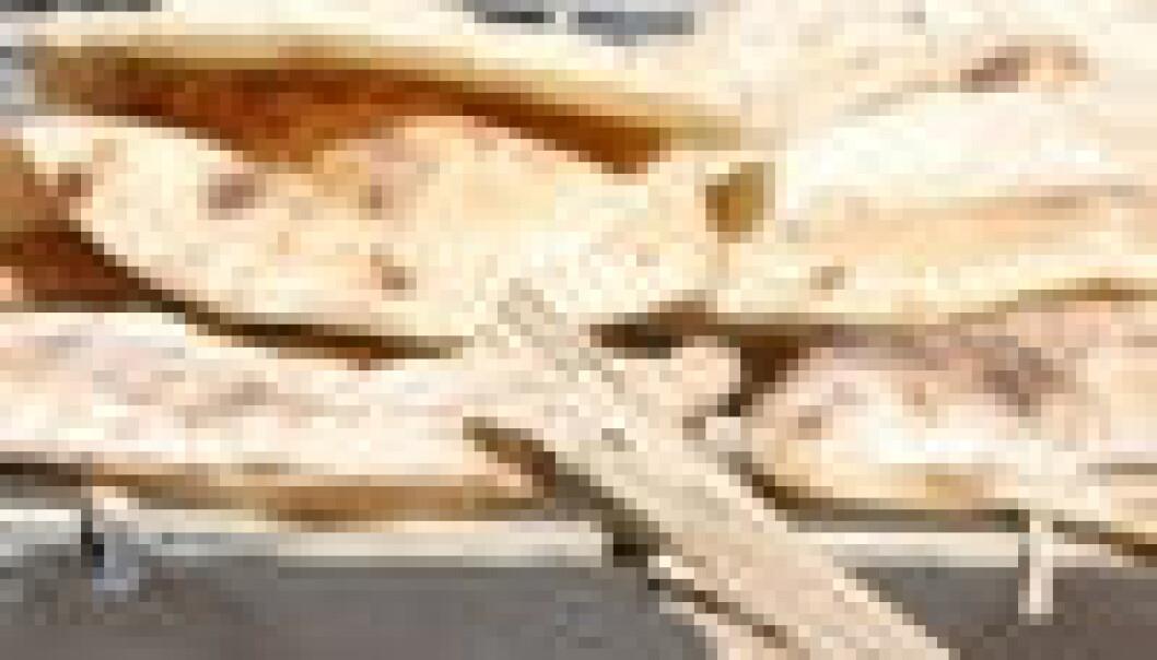 Kamp om brødet i Egypt