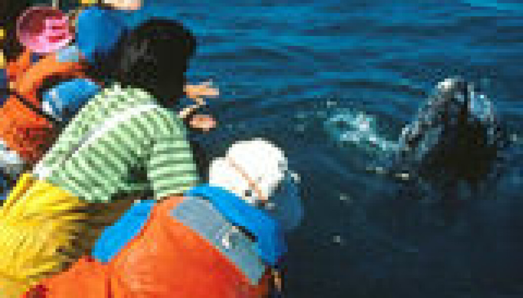 Keiko kan øke hvalsafari i Norge