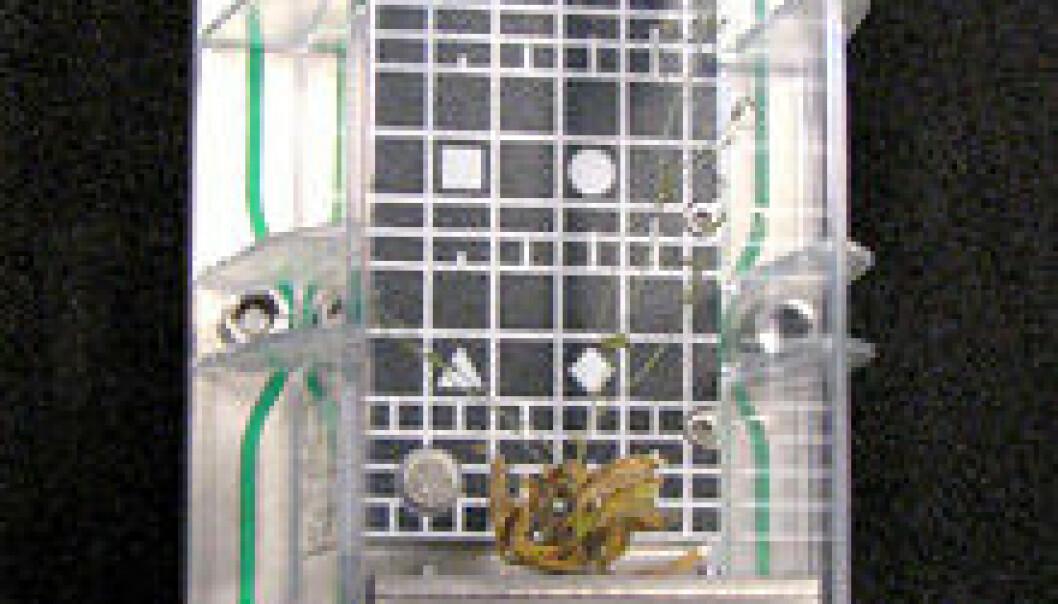 """""""Vekstkammer med vårskrinneblom som har vokst i rommet. Planten var en del av forsøket Multigen-1 som foregikk på den Internasjonale Romstasjonen vinteren 2007."""""""
