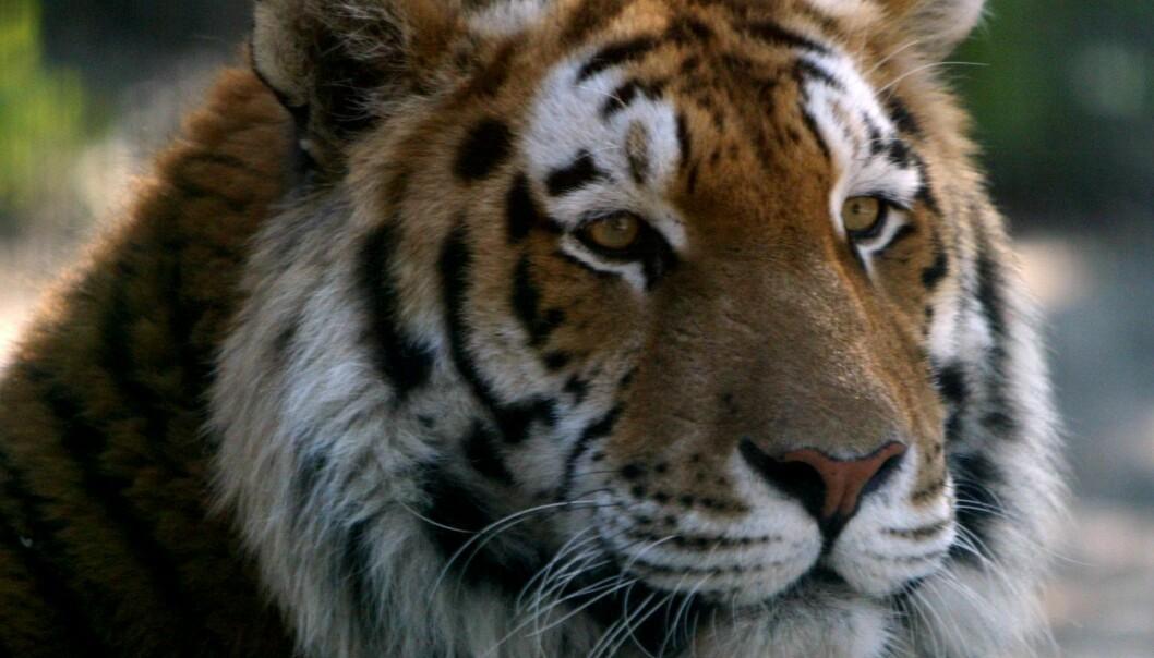 Kan Viagra redde truede dyrearter?