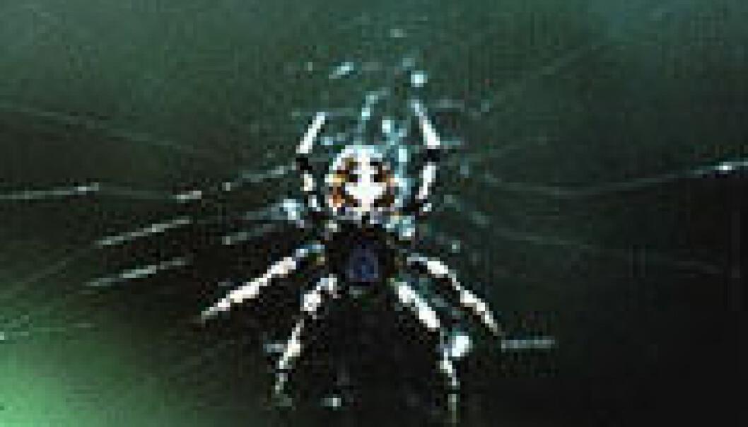 Flue angriper edderkoppkoloni