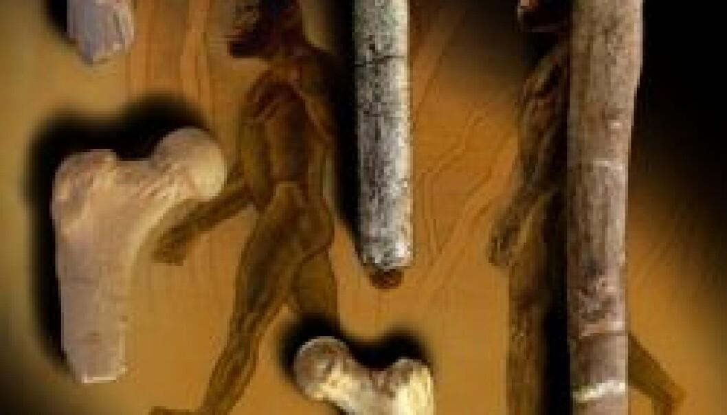 """""""Et lårbein som er seks millioner år gammelt (midten) kommer fra noen av våre tidligste forfedre som gikk oppreist. De ligner 2-3 millioner år gamle lårbein fra australopiths (venstre, nederst). Lårbein fra Homo (høyre) markerer en overgang mot et mer moderne ganglag for rundt 2 millioner år siden."""""""
