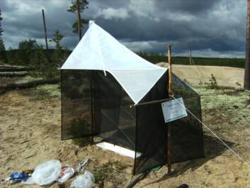 """""""Insektfelle i sandområde på Starmoen ved Elverum. Her ble det funnet 10 nye arter broddveps i 2007. (Foto: Frode Ødegaard, NINA)"""""""