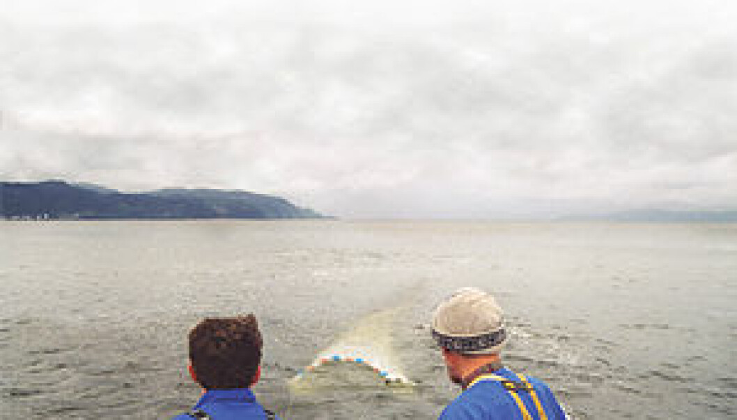 """""""Forskerne prøver å finne en ressurs i havet som ligger såpass langt ned i næringskjeden at vi kan høste store mengder uten å forstyrre den biologiske balansen. (Foto: Nina E. Tveter)"""""""