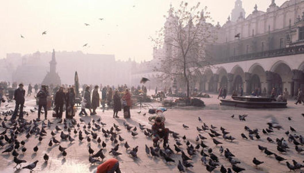 """""""Byene syder av dyreliv. Her et motiv fra torget i Krakow, Polen."""""""