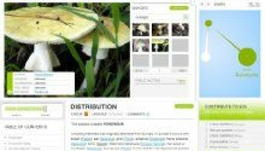 """""""Denne siden om grønn fluesopp var en av de aller mest populære sidene da nettstedet åpnet på tirsdag."""""""