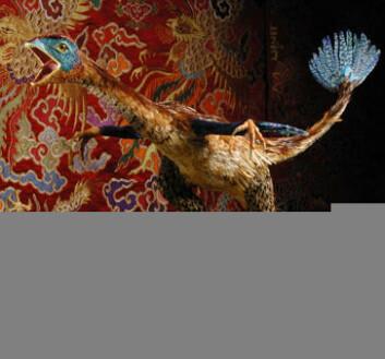 """""""En rekonstruksjon av kinesiske Caudipteryx, laget av Bogdan Bocianowski og Per Thorsland ved De naturhistoriske museene på Tøyen."""""""