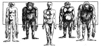 """""""Evolusjonsmessig står menneske og sjimpanse hverandre nærere, enn sjimpanse og orangutan. Men evolusjonen av hjernen har vært spesielt aktiv hos menneskene, så mentalt står vi helt for oss selv"""""""