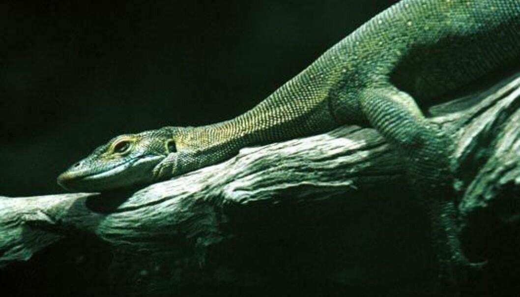 """""""En ny varan, fem frosker, fire slanger - og en rekke andre nye dyr er funnet på Filippinene"""""""