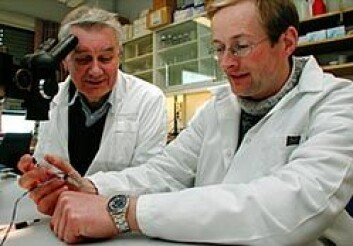 """""""VIKTIG PATENT: Electrofect-gründerne Terje Lømo (t.v.) og Iacob Mathiesen snappet et viktig patent foran det internasjonale farmasikonsernet Aventis. (Foto: Bjarne Røsjø)"""""""