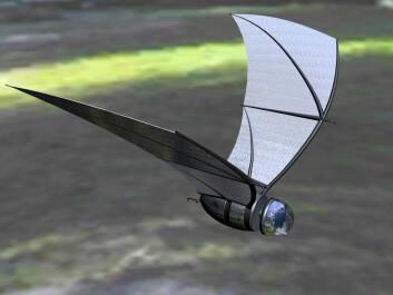 """""""Slik ser forskerne for seg at dronen kan se ut når den er på vingene. The bat skal bare bli rundt 15 centimeter lang, og veie drøyt 100 gram. Den skal utvikles spesielt for overvåking og spionering ved krigføring i byområder. Rettigheter: (Eric Maslowski, University of Michigan)"""""""