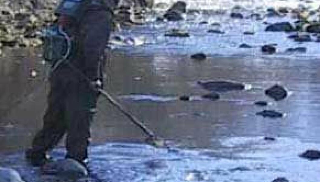 """""""NIVA forsøker nå med metalltilførsel i Nivla, sidevassdrag til Lærdalselva, for å bekjempe lakseparasitten Gyrodactylus salaris. (Foto: Torstein Kristensen, NIVA)"""""""
