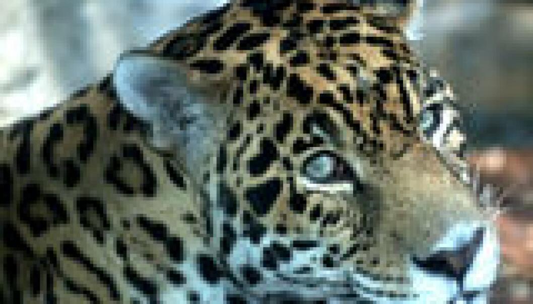 Brasil oppretter verdens største tropiske nasjonalpark