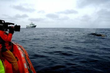 """""""Kameramannen Nick Guy filmer hval fra mann over bord-båten med G.O. Sars i bakgrunnen. (Foto: Kjartan Mæstad)"""""""