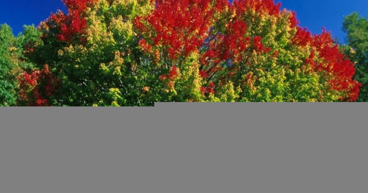 065ecfed Høstens farger mer enn et vakkert skue