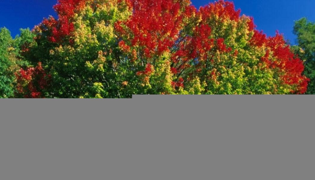 Høstens farger mer enn et vakkert skue