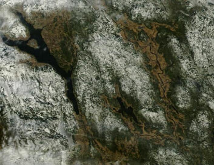 Omsider litt skyfritt vær på Østlandet. Her er området sør og øst for Mjøsa observert 12. mars. (Foto: (NASA Terra MODIS))