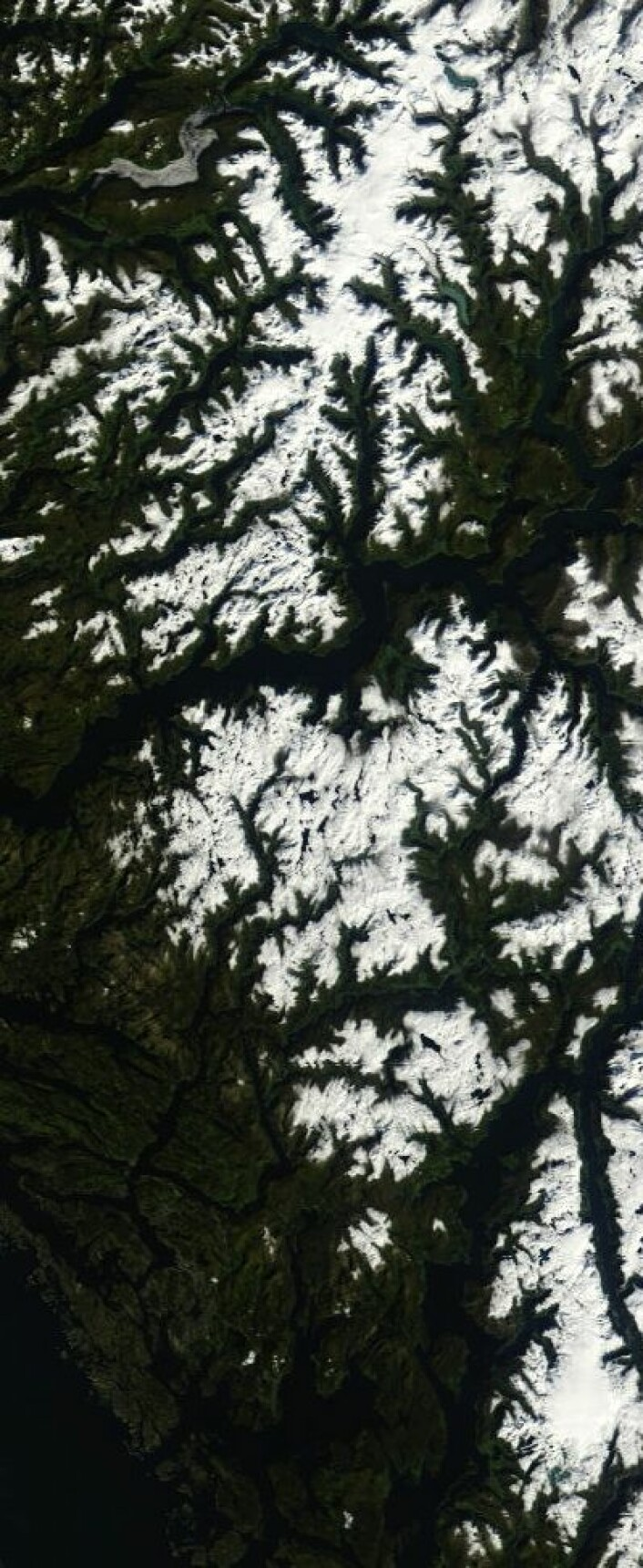 Kalenderen viser 22. september, og mye snø har allerede lagt seg i fjellet på Vestlandet i følge dette satellittbildet. (Foto: (NASA Terra MODIS).)
