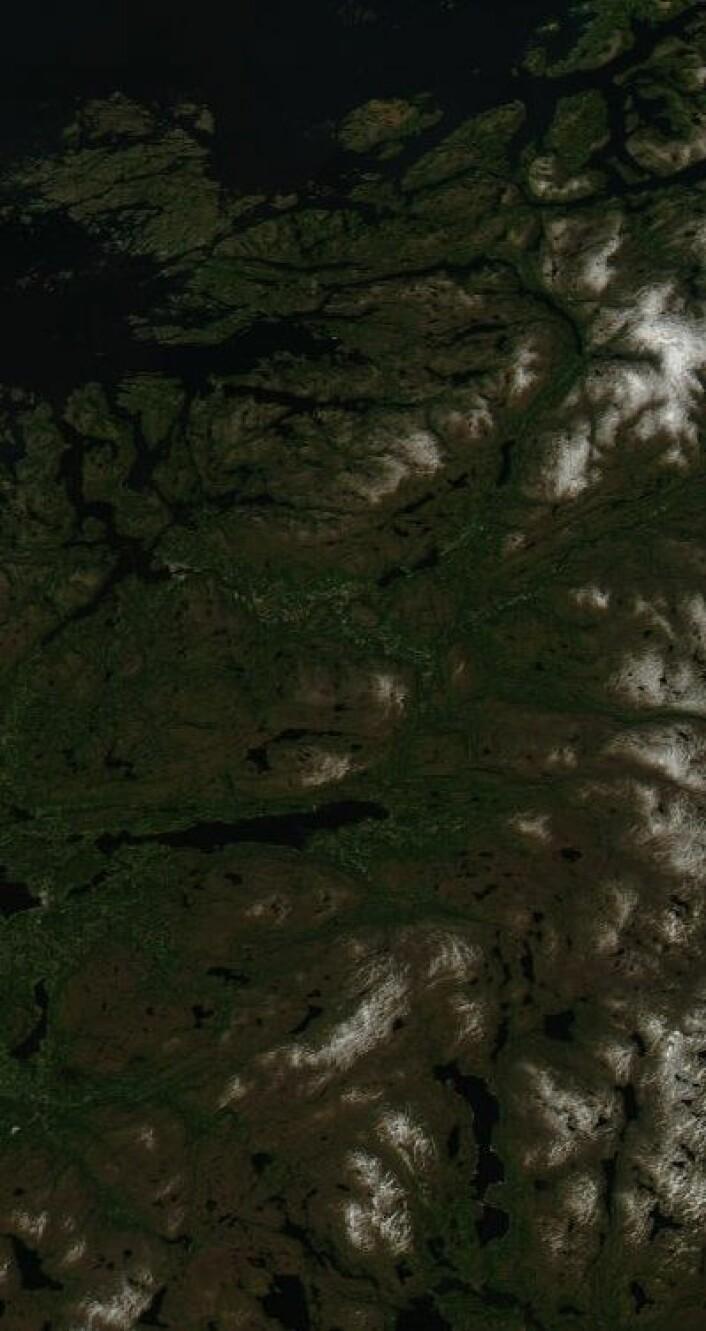 Nord-Trøndelag sett fra NASAs satellitt Aqua 12. juni i år. Fine farger i naturen der også, ja. (Foto: (NASA Aqua MODIS))
