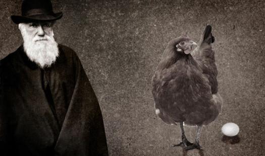 Darwin, høna og egget