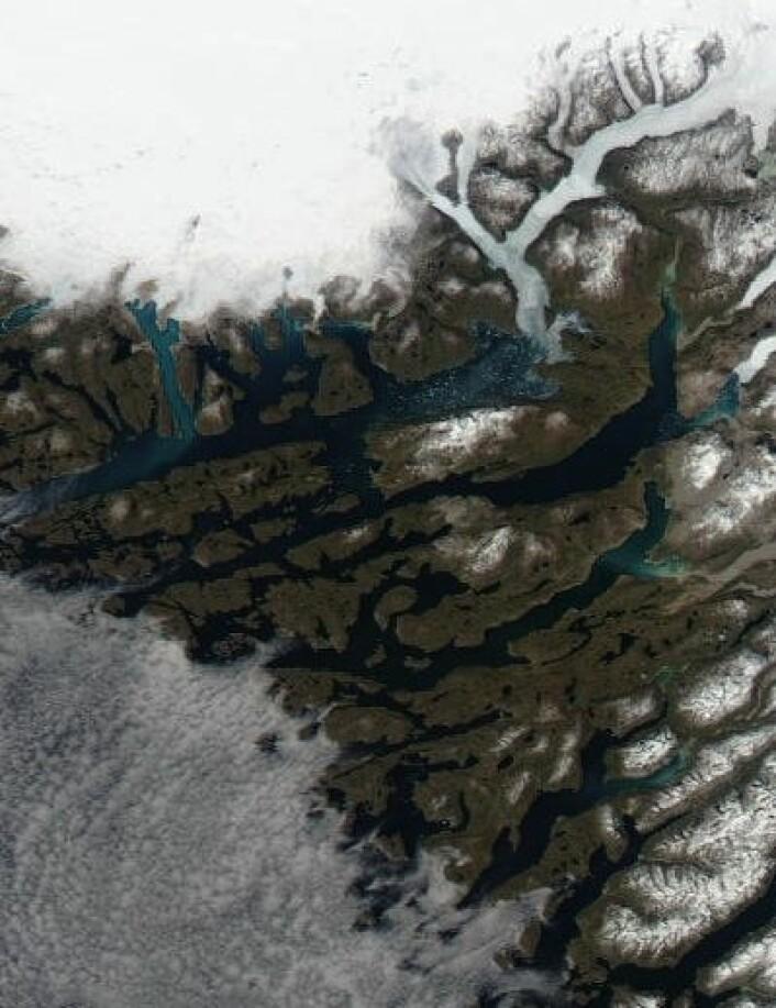 Mye isfjell i fjorden ved Eirik Raudes gamle hjemtrakter nå. (Foto: (NASA Aqua MODIS))